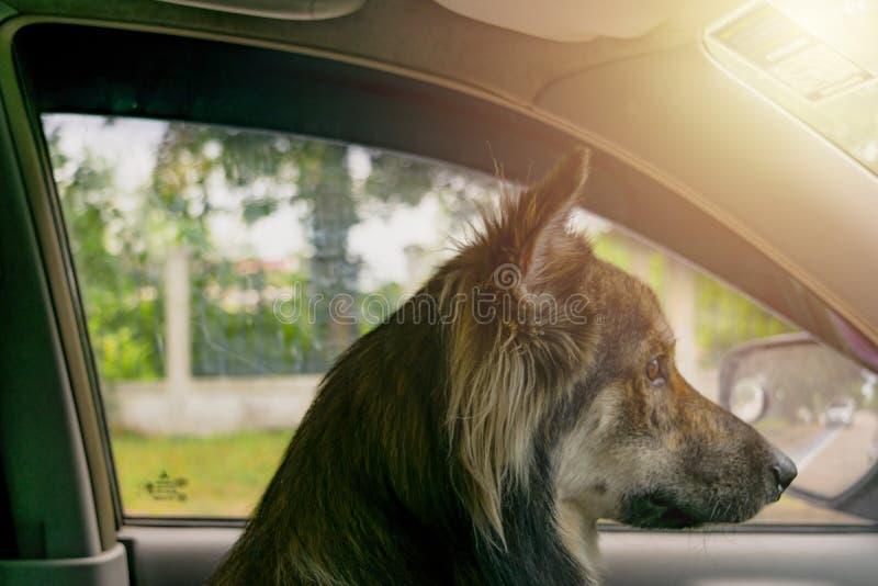 Hundsammanträde på bilen royaltyfria bilder