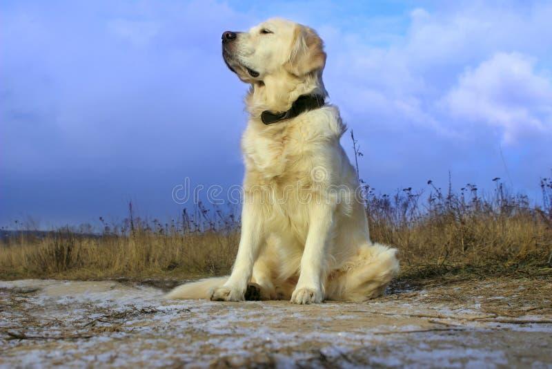 Hundsammanträde på väg- och vänta påägaren royaltyfri bild