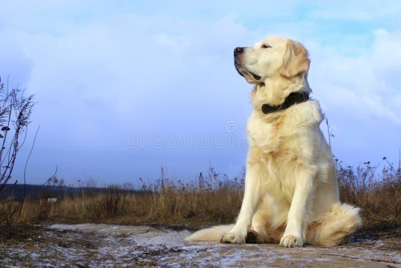 Hundsammanträde på väg- och vänta påägaren fotografering för bildbyråer