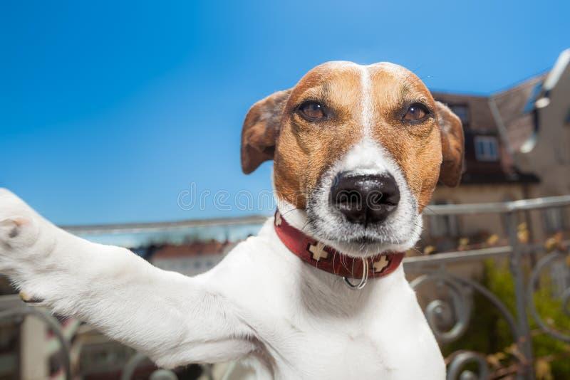 Hundselfie arkivbild