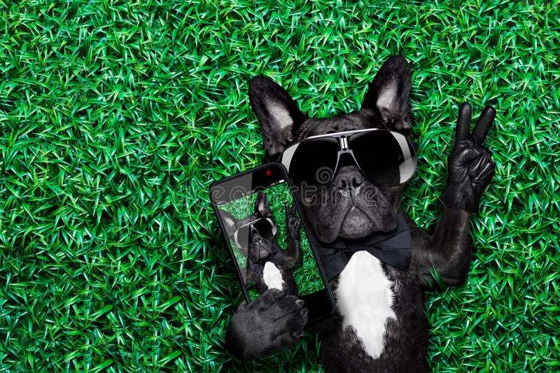 Hundselfie royaltyfri foto