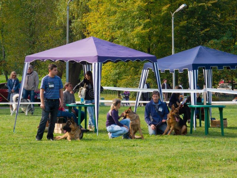 Hundshow royaltyfria foton