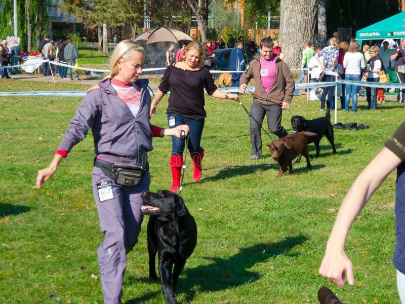 Hundshow royaltyfria bilder