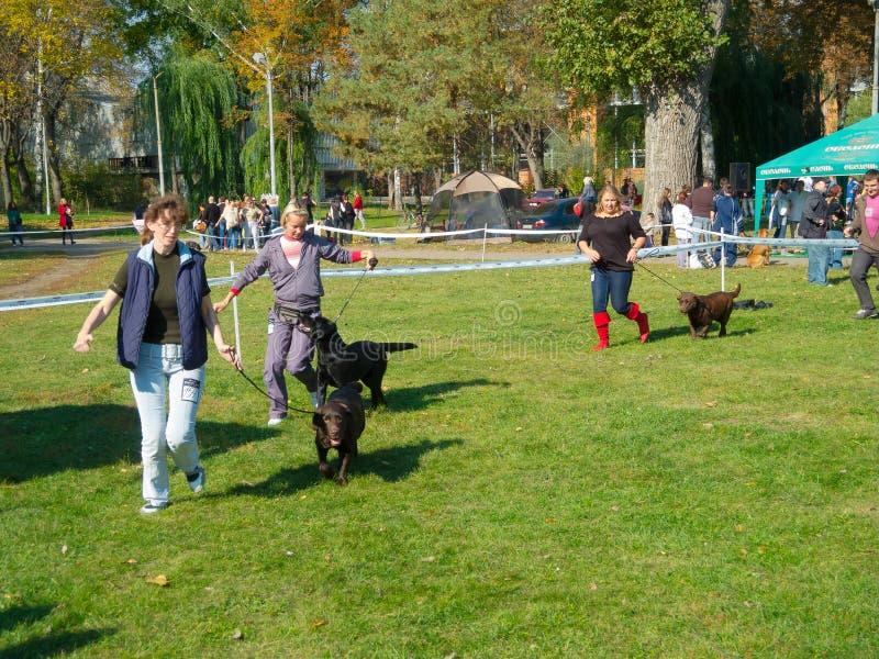 Hundshow royaltyfri fotografi