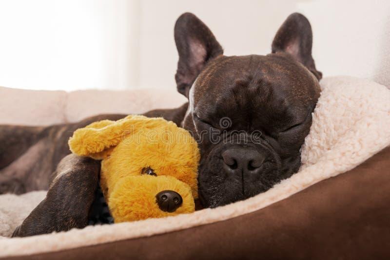 Hundsiestasömn arkivbilder