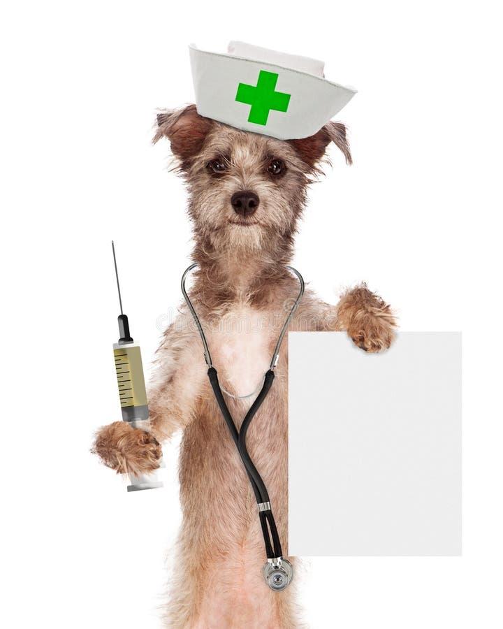 Hundsjuksköterska With Shot och tecken arkivbilder