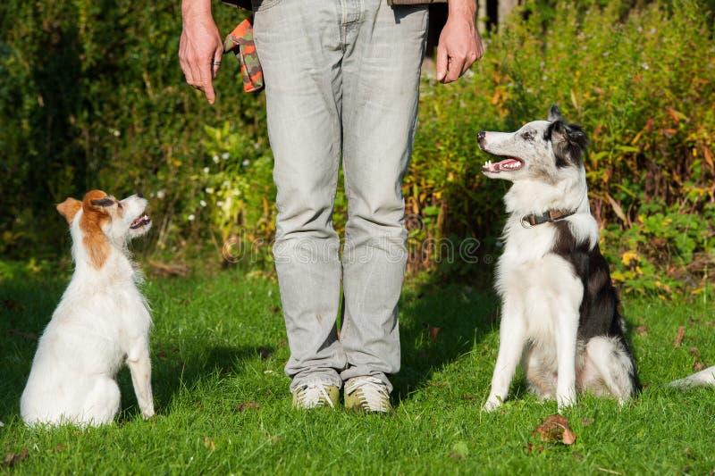 Hundskola royaltyfria foton