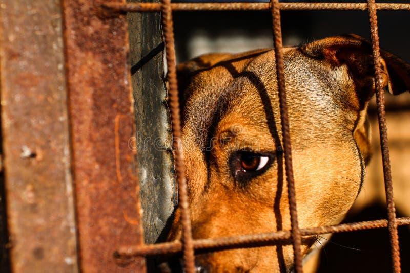 Hundskydd - hopp - djurliv arkivbilder