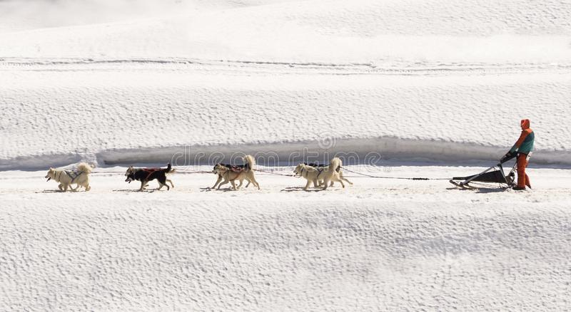 Hundsläde med laget för skrovlig och eskimo hund royaltyfri fotografi