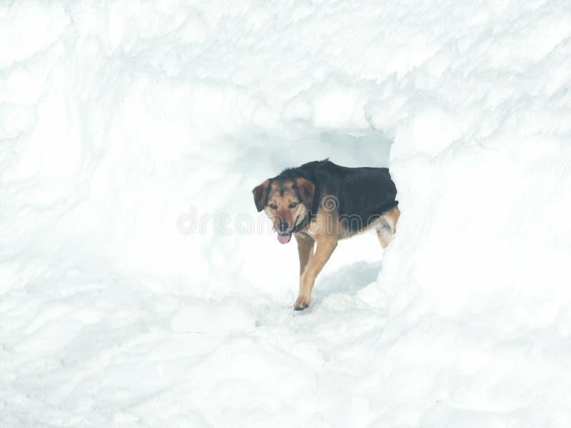 hundsnow fotografering för bildbyråer
