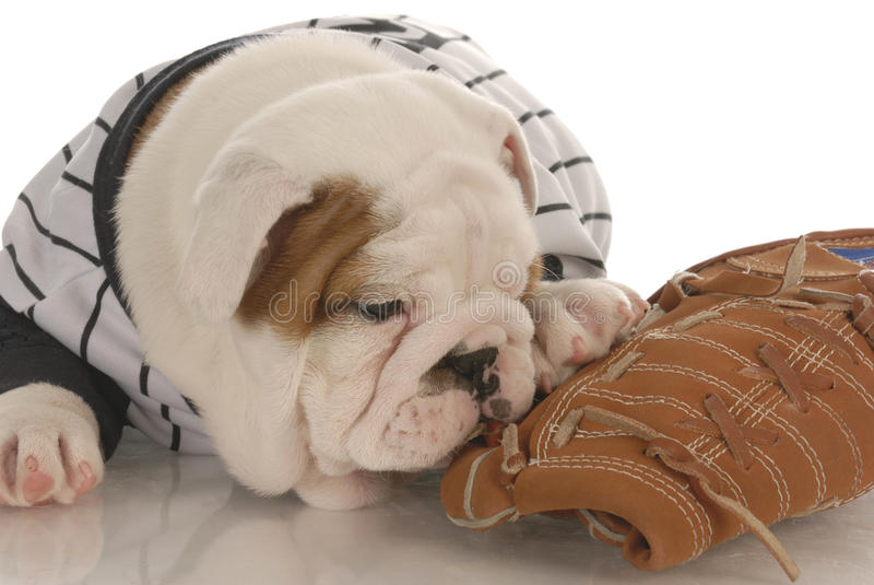 hundsportar royaltyfri foto