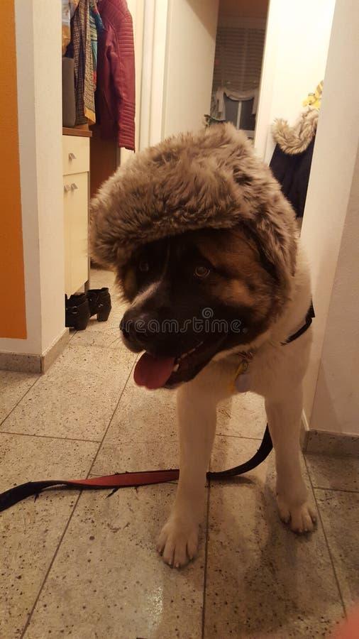 hundstående s royaltyfria foton