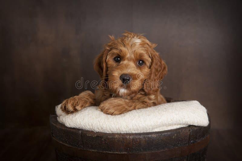 hundstående s royaltyfri foto