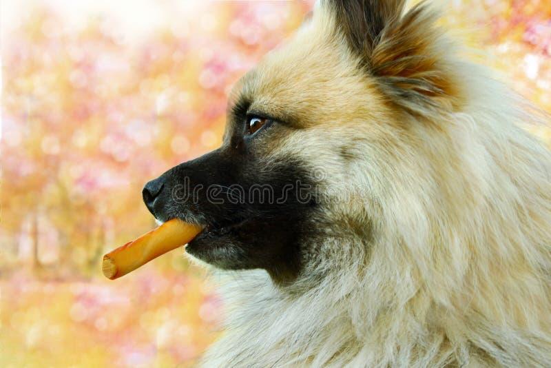HundTreat royaltyfri bild