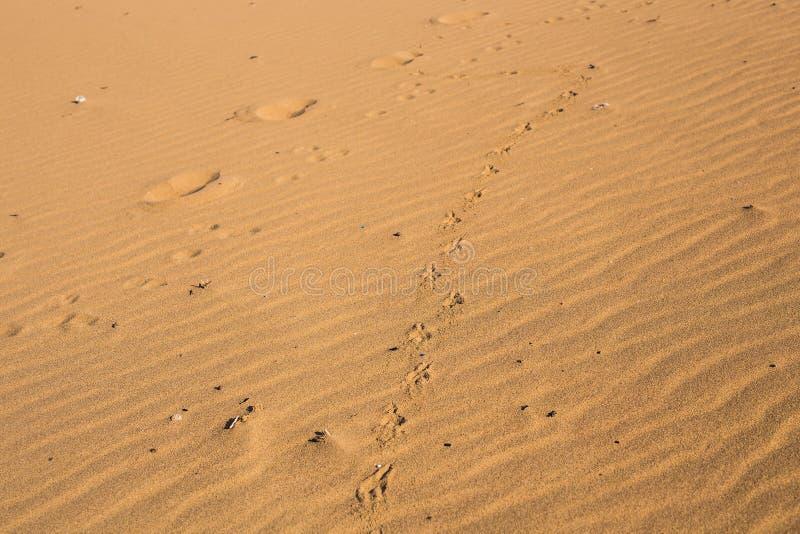 Hundtryck på sand arkivfoton