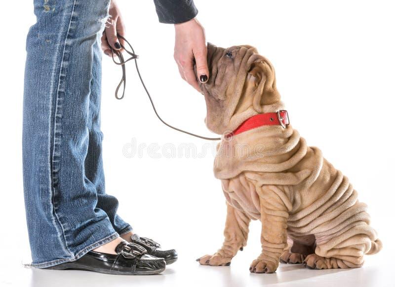 Hundutbildning fotografering för bildbyråer