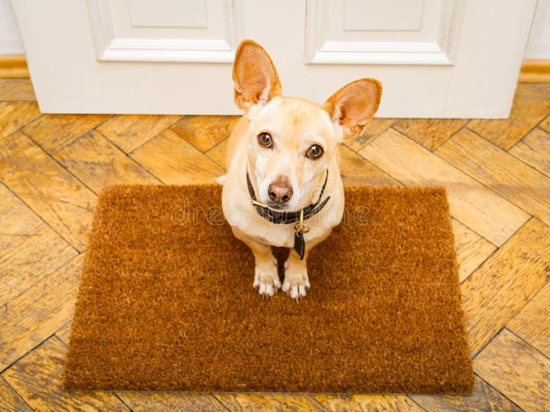 Hundväntningar på dörren för en gå fotografering för bildbyråer