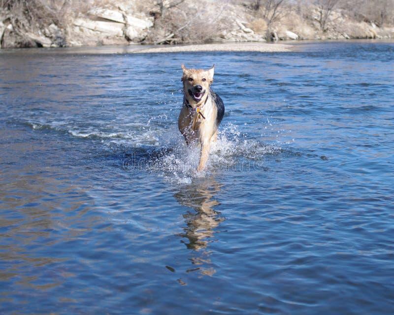 hundvatten royaltyfri bild