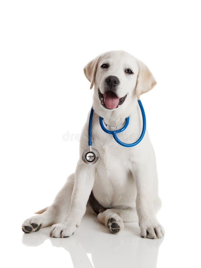 hundveterinär royaltyfri foto
