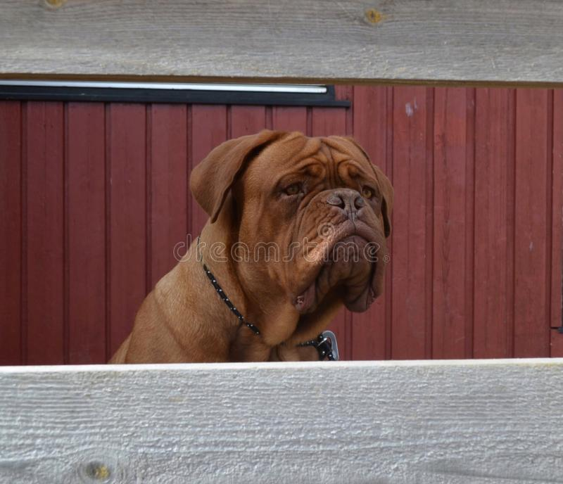 Hundyttersidalek royaltyfri fotografi