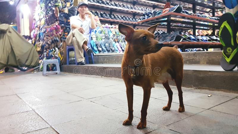 Hundyttersidan shoppar, Hanoi, Vietnam arkivbild