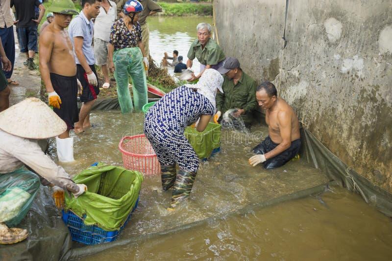 Hung Yen, Vietnam - 26 juillet 2015 : Les gens rassemblent des poissons pour le poids après capture dans l'étang avant la livrais photo libre de droits
