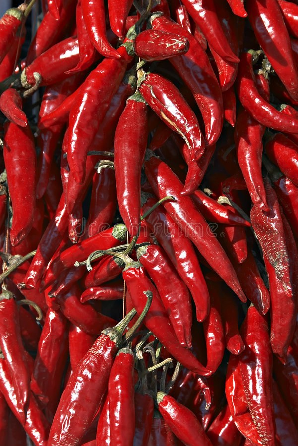 Hungarian red hot pepper royalty free stock image