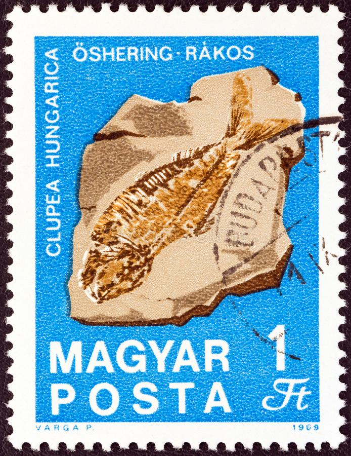 HUNGARY - CIRCA 1969: A stamp printed in Hungary shows Hungarian herring fossilized fish, circa 1969. HUNGARY - CIRCA 1969: A stamp printed in Hungary from the stock photography