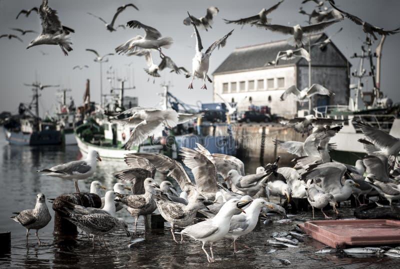 Hungrig fågelseagull arkivfoto