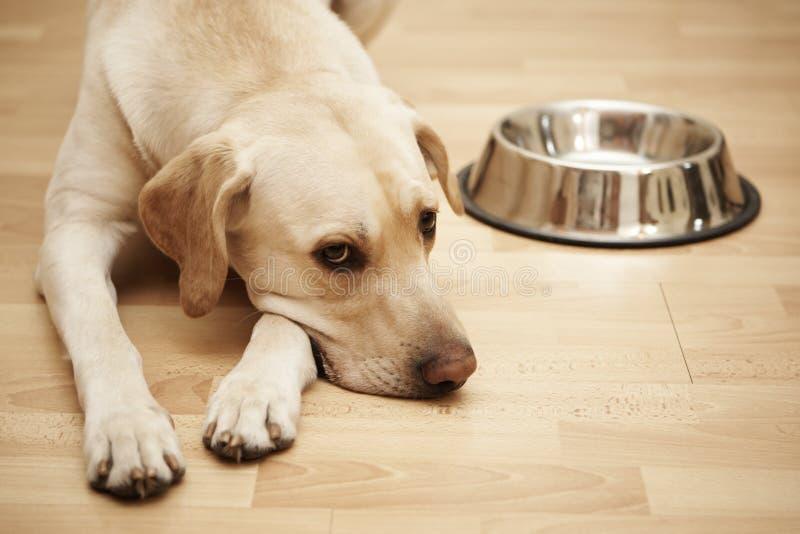 hungrig hund royaltyfri foto