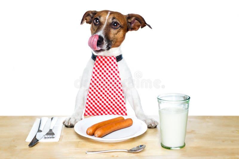 hungrig hund arkivbilder