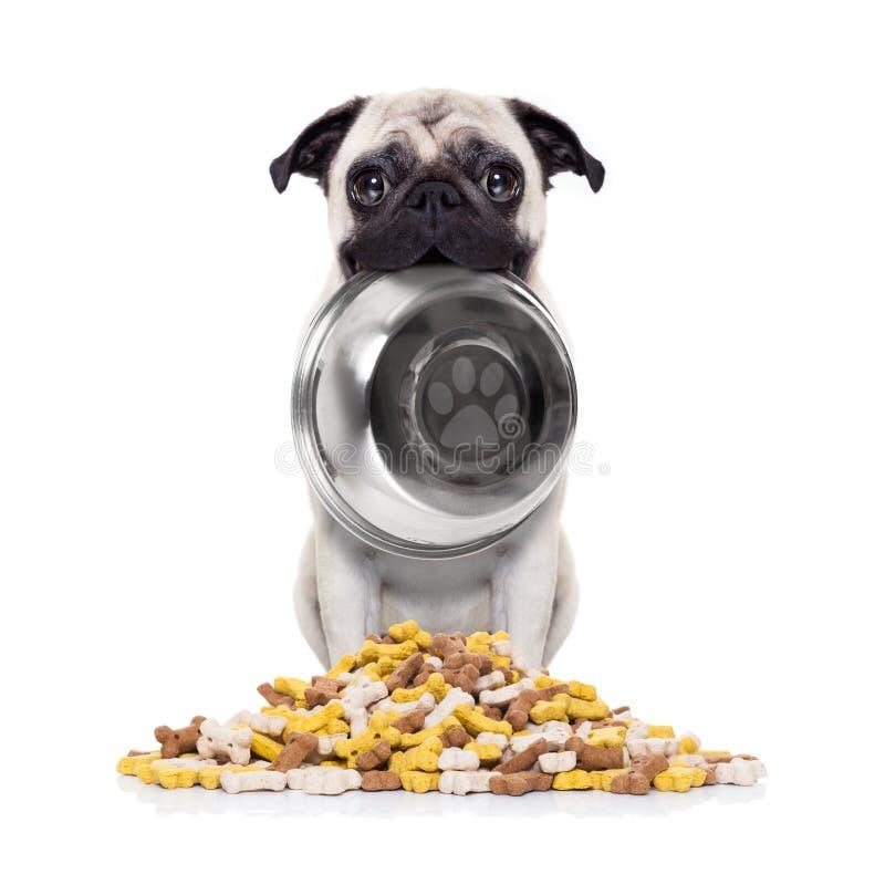 Hungrig hund med bunken royaltyfri fotografi
