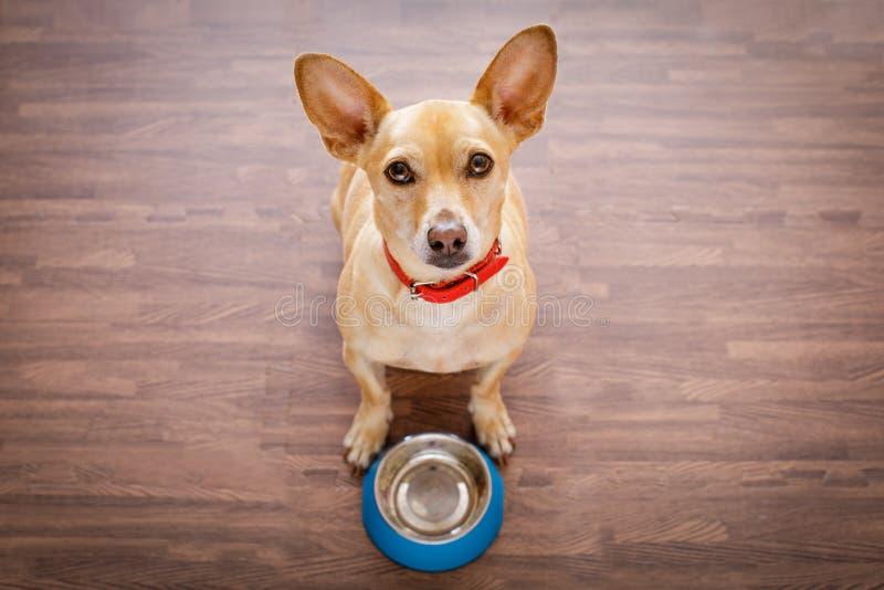 Hungrig hund med matskålen royaltyfri fotografi