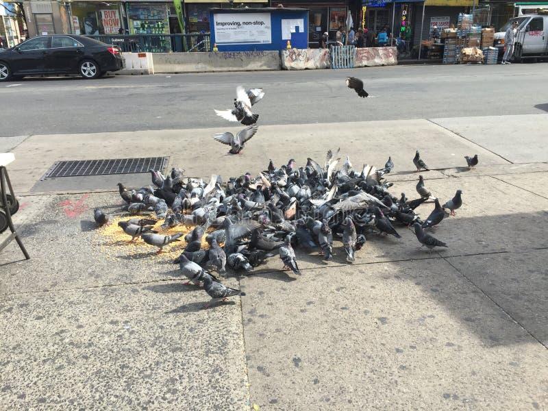hungriga attackfåglar royaltyfri foto