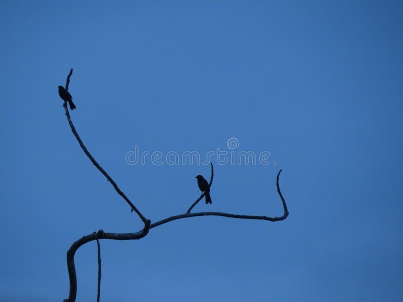 hungriga attackfåglar royaltyfri bild