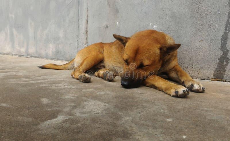 Hungrige Wartezeit des streunenden Hundes jemand geben Lebensmittel auf schmutzigem Boden neben alter Wand lizenzfreie stockfotografie