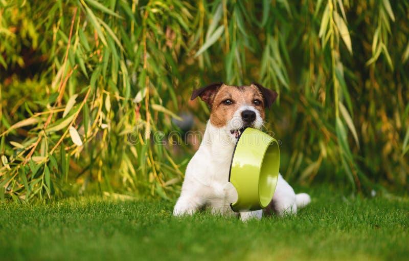 Hungriger Hund, der um das Lebensmittel hält Hündchenschüssel im Mund bittet lizenzfreies stockfoto