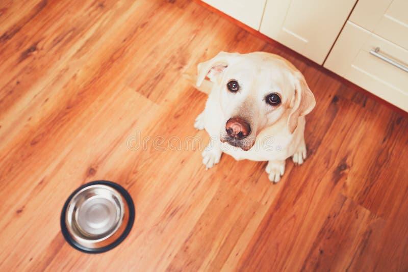Hungriger Hundewartefütterung stockbilder