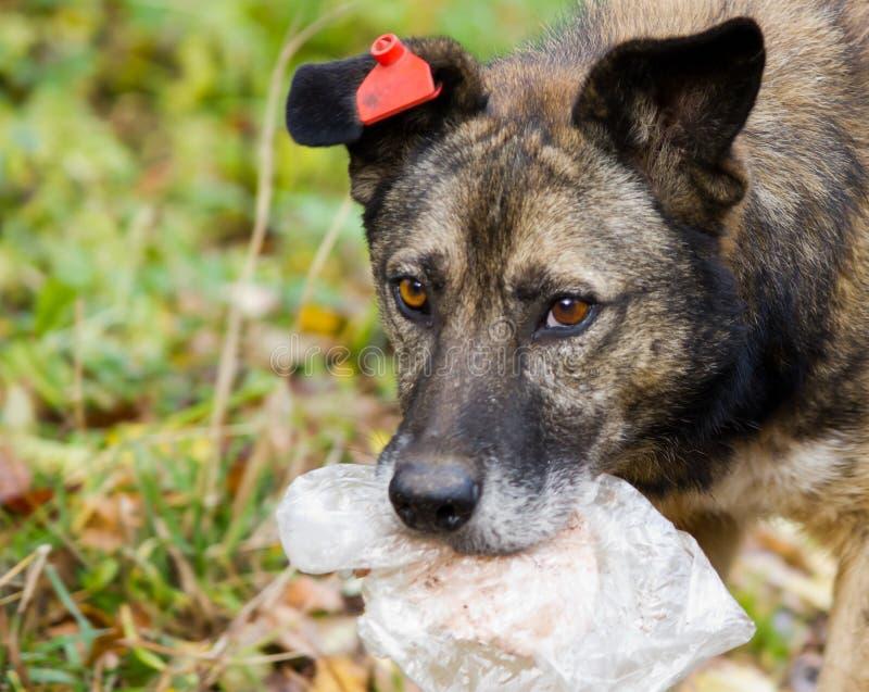 Hungriger Straßenhund lizenzfreie stockfotografie