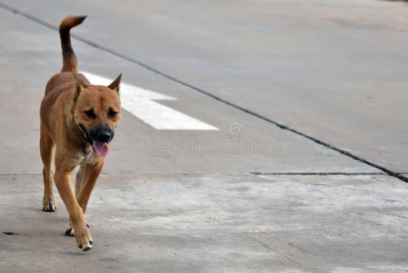 Hungriger Weg der streunenden Hunde allein lizenzfreies stockbild