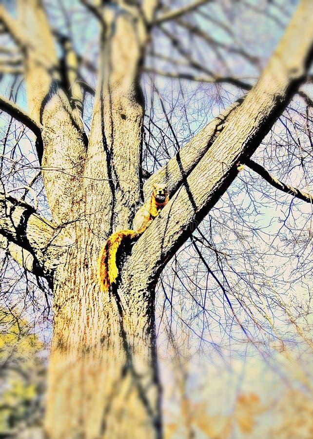 Hungriges Eichhörnchen mit einer Nuss stockbilder