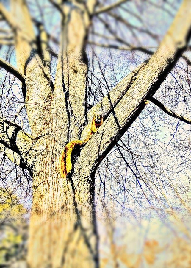 Hungriges Eichhörnchen und seine Nuss stockfotografie