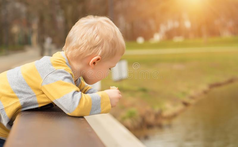 Hungry boy eating in the park stock photography