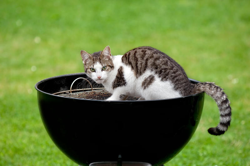 Download Hungry cat stock image. Image of bowl, starvation, play - 13447125