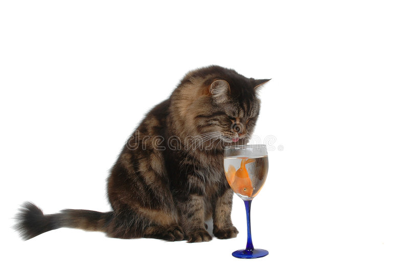 Hungry cat 4 royalty free stock images