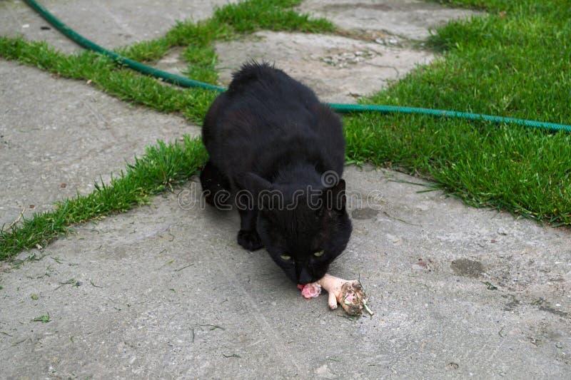 Cat eating chicken leg stock photo