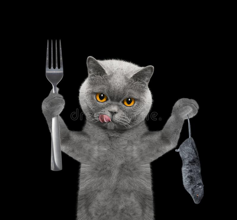 The hungry cat is going to eat a mouse. Isolated on black royalty free stock photo