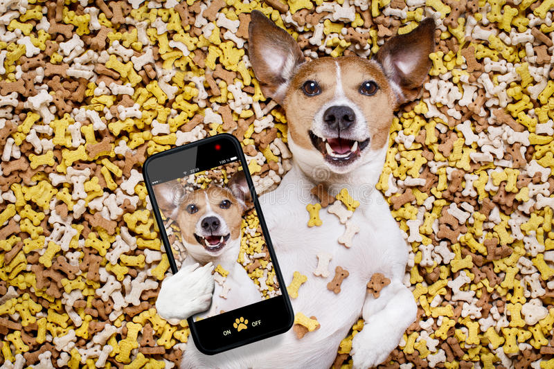 Hungry dog in big food mound stock photos