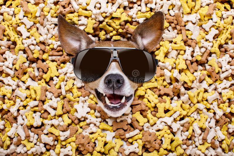 Hungry dog in big food mound stock photography