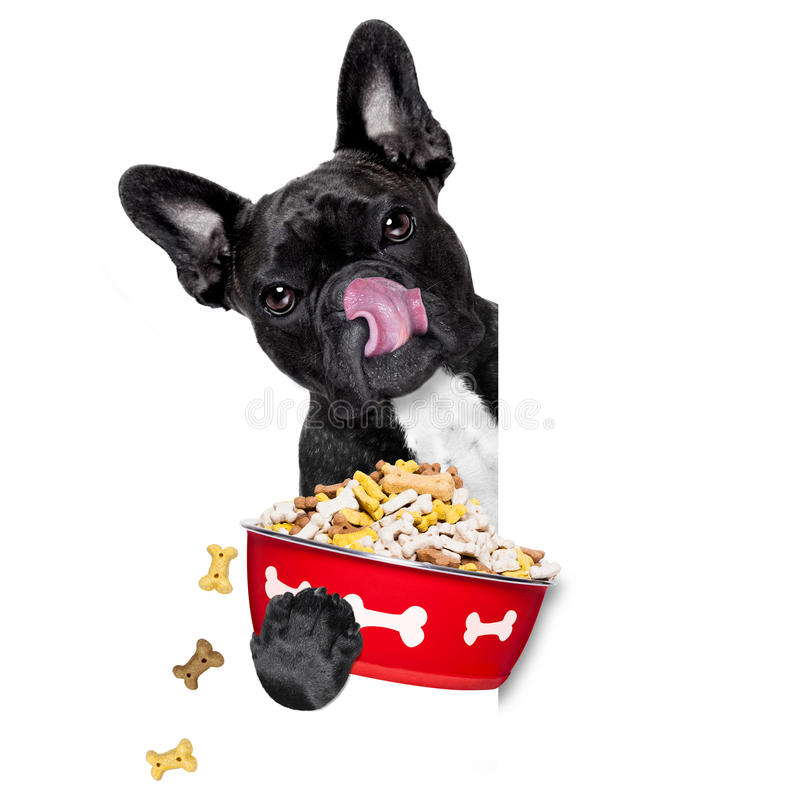 Hungry dog bowl stock images